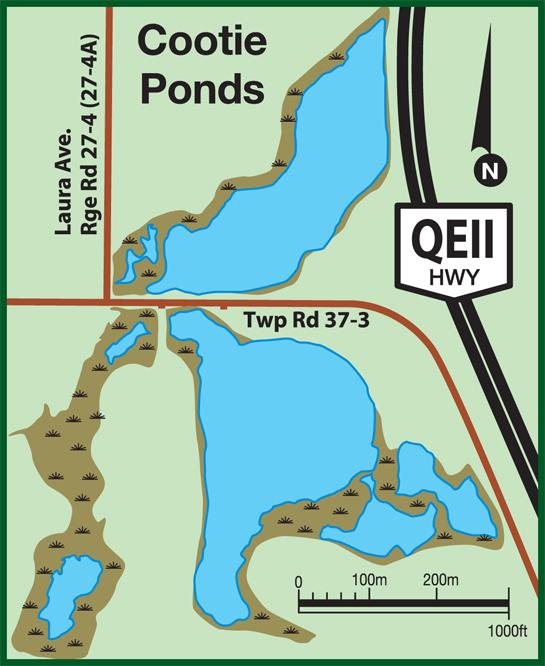 cootie-ponds